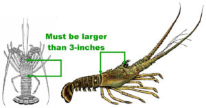 Measurement Guidelines