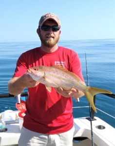 Yellowtail snapper image