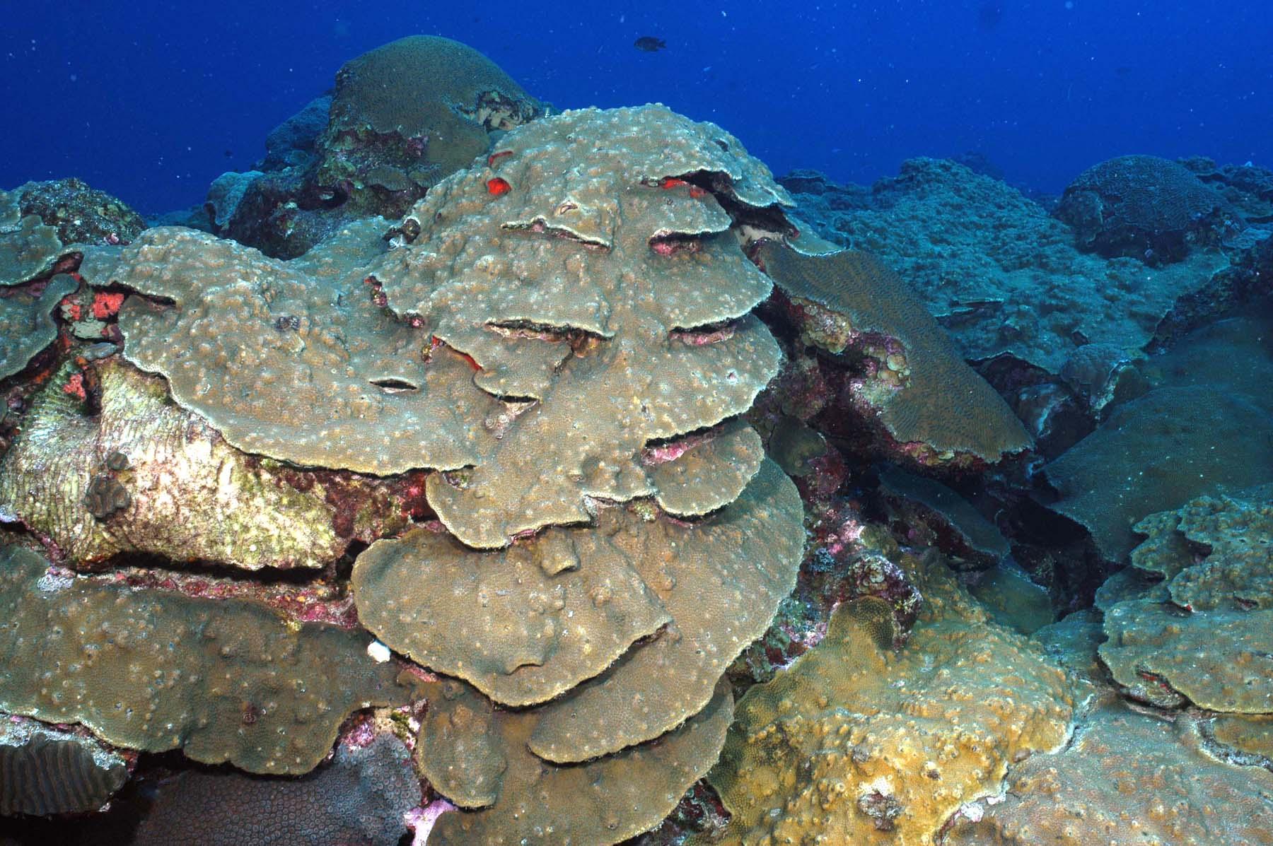 reefscapegps
