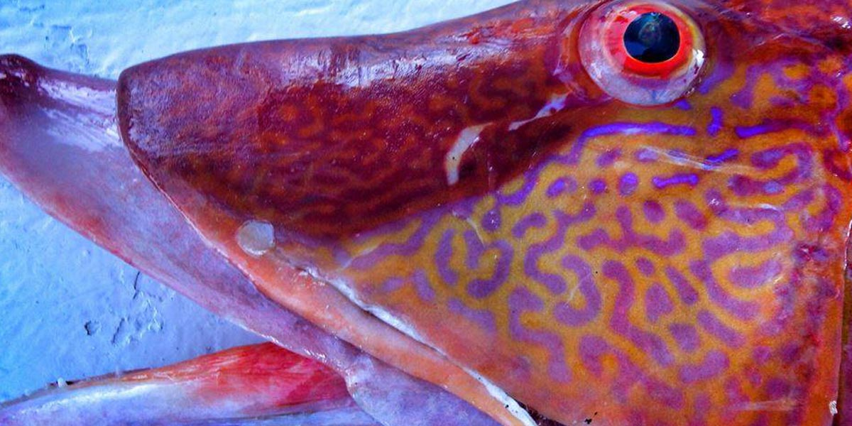Gulf of Mexico Fishery Management Council | Managing fishery